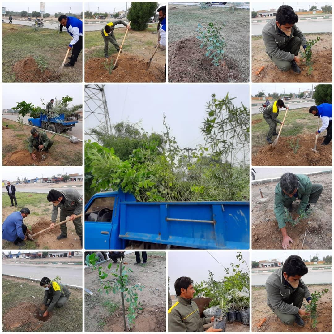 عملیات کاشت گل های فصلی و درختان بومی در بلوارها و میادین سطح شهر